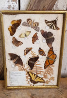 Vintage Framed Butterfly Collection