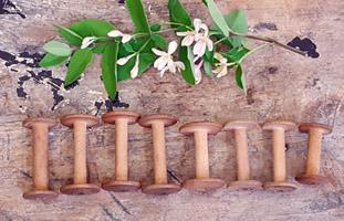 Lot of Slender Old Wood Spools