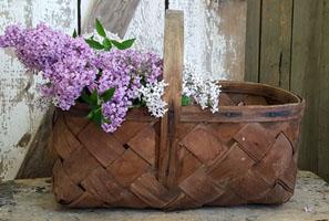 Old Market Basket