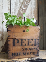 Old Wood Tobacco Box