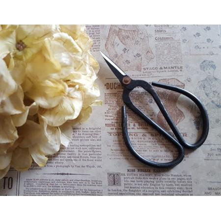 Old Fashioned Scissors